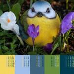 """Tavolozza dalla natura * Palette """"Bird's Smile"""""""