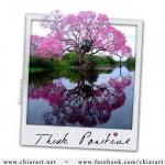 Think – di Pina d'Aniello